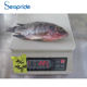 Health food cheap price fish frozen tilapia