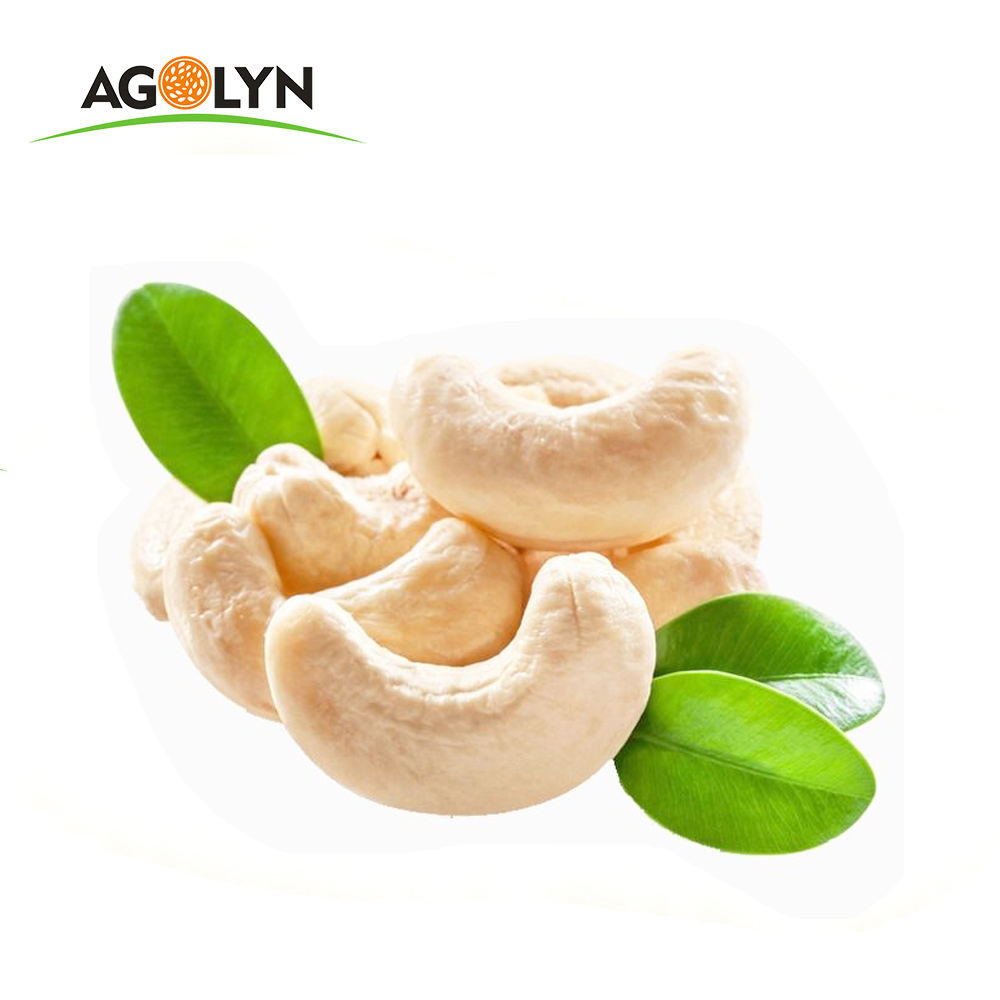 Factory Price W240 / W320 Raw White Cashew Nuts