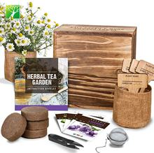 New arriving tea bonsai garden starter kit for children adults holiday gifts