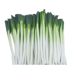 Best-selling white scallions mildly spicy and delicious