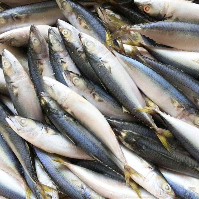 Seafrozen MACKEREL AND Sardine Fish Fresh Seafood