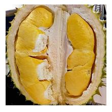 Fresh Fruit Durian Size 20-30cm Ri6 Brand Name Cultivation Type Organic Tan Son Nhat Port