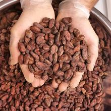 Certified Best Wholesale price Cacao Beans / Dried Criollo Cocoa Beans