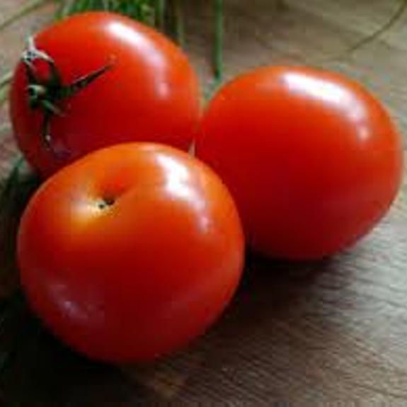 Organic Tomatoes for export