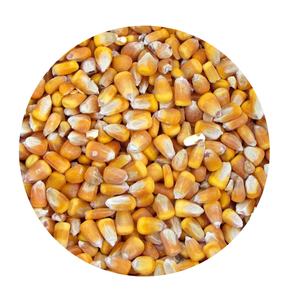 Dried Yellow Corn - Maize Dry For Animal Feed (84 237 8655 789)