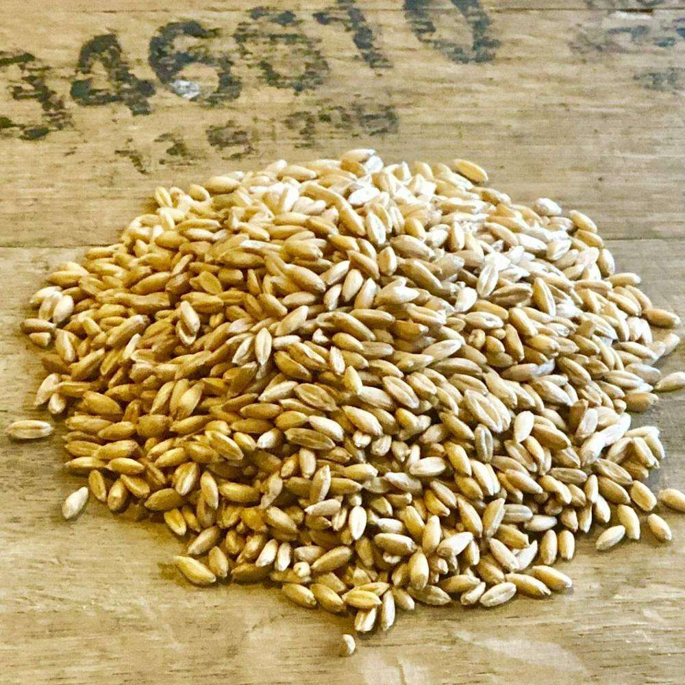 Bulgar Wheat From Ukraine Dried Grade 3 Wheat Grain best wholesale
