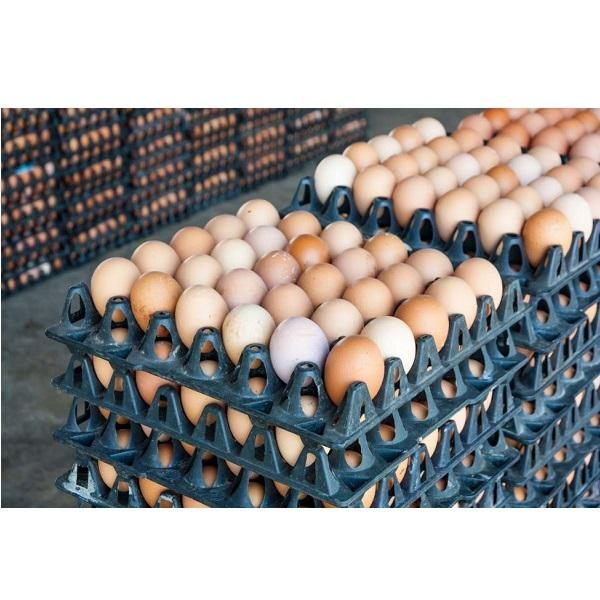 Best quality farm fresh brown & white chicken eggs for sale ***