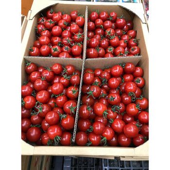 Burpee Super Sweet 100' Hybrid Cherry Tomato, 50 Seeds