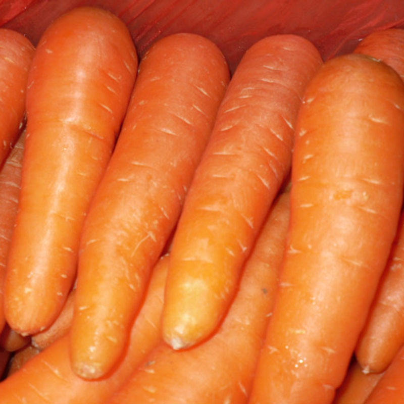 Premium Grade A Fresh Red Carrot - Competitive Price and Good Quality
