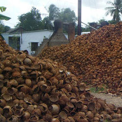 100% RAW COCONUT SHELLS BEST PRICE  FOR MAKING CHARCOAL