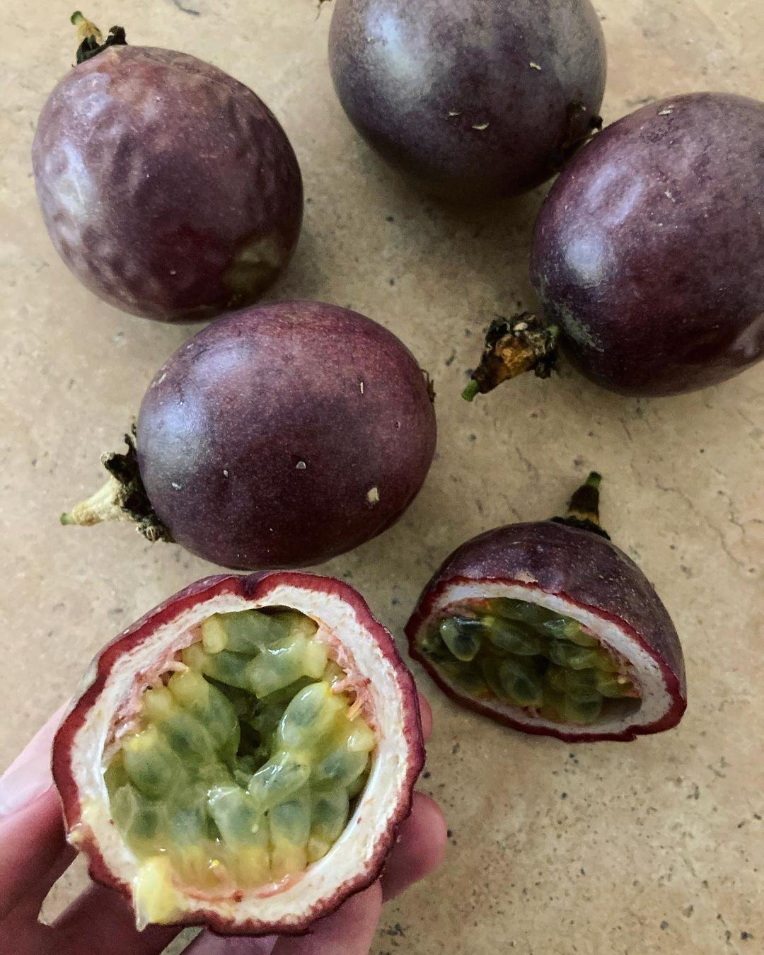 <span class=keywords><strong>Trái</strong></span> <span class=keywords><strong>Cây</strong></span> <span class=keywords><strong>Khô</strong></span> Deglet Nour Dates / Fresh Passion Fruit