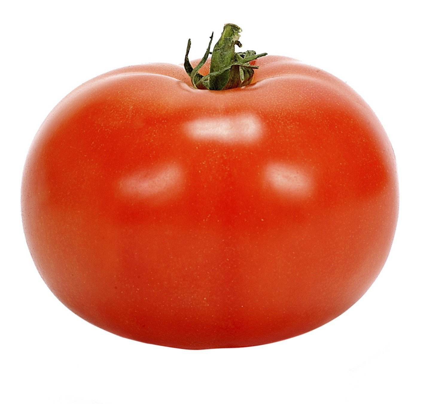 Best Price High Quality Fresh Tomato