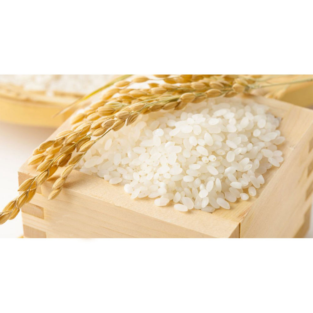 JAPONICA RICE /SUSHI RICE/ROUND RICE