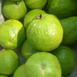 US Grown Fresh Fruit and Dried Guavas