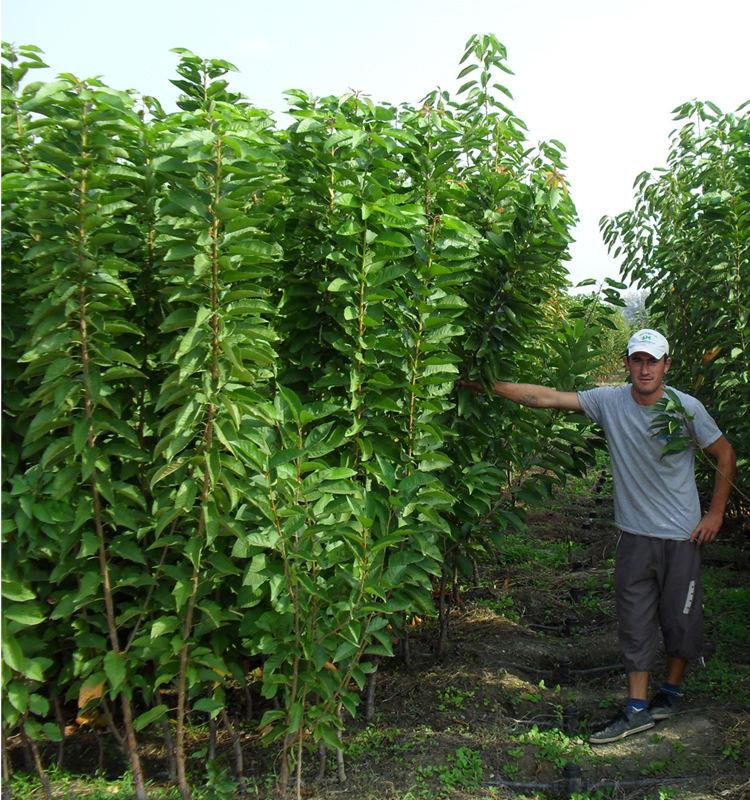 Plant Farm Whole Saplings Greece