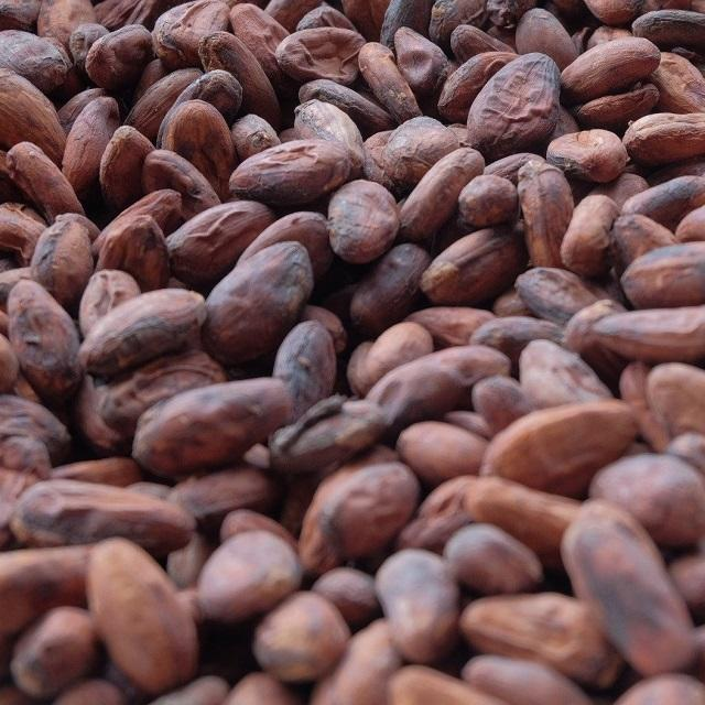 Africa Dried Cocoa Beans Cheap Price High Quality Organic wholesale