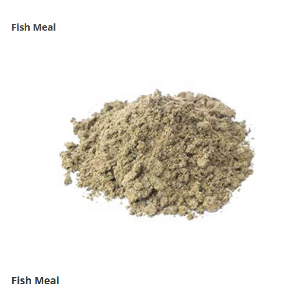 Pure Fish meal for Animal Feed