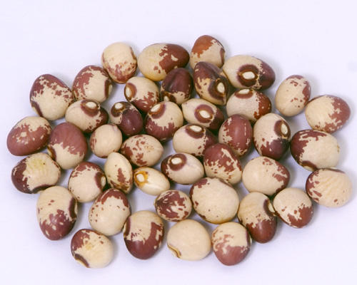 High Quality Pinto Or Mottled Beans Sultani Red and White Beans from Myanmar (WhatsApp: +6581317198)