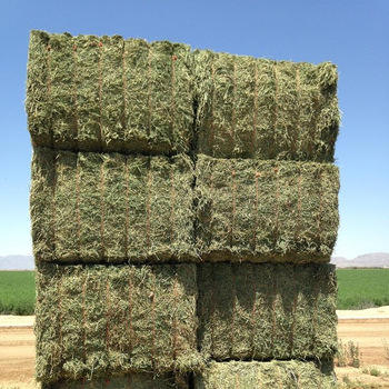 Best Selling Alfalfa Hay/Alfalfa Hay For Animal feeding