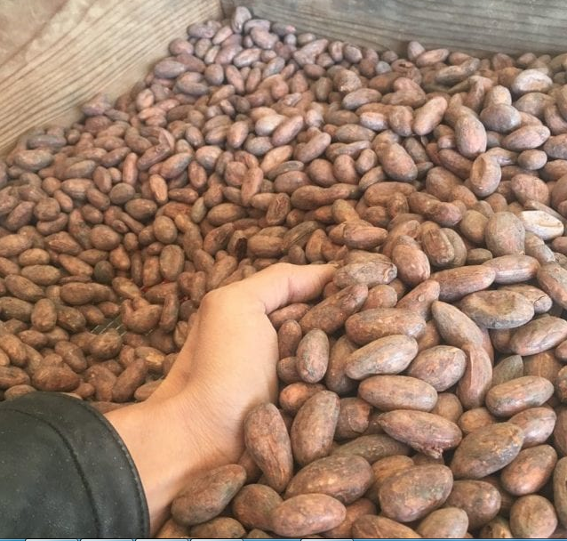 Quality Dried Cacao Beans / Cocoa- Beans From Cameroon