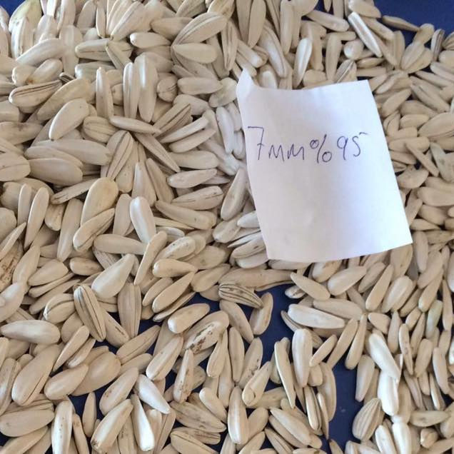 WHITE SUNFLOWER SEEDS 6-7-7,5MM BEST QUALITY