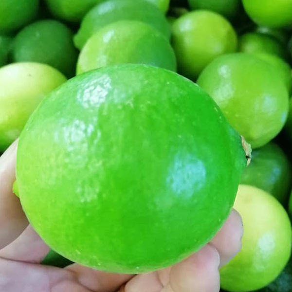 New harvest 2020 Vietnamese limes exported high quality: thin skin, succulent, big fruit
