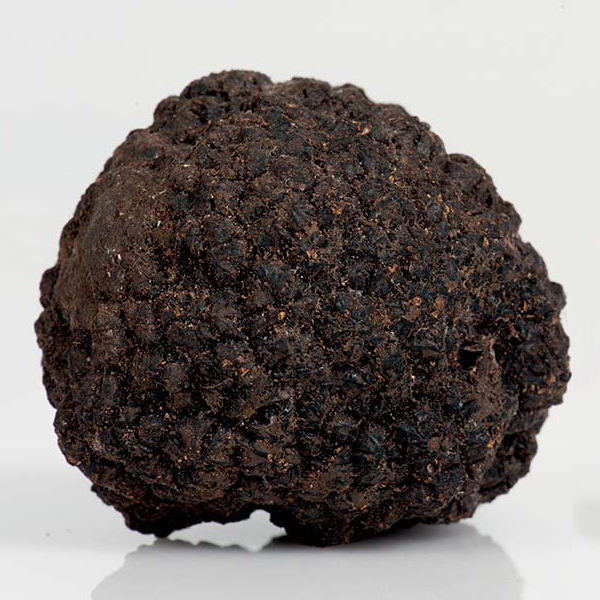 Italian fresh whole black summer truffles
