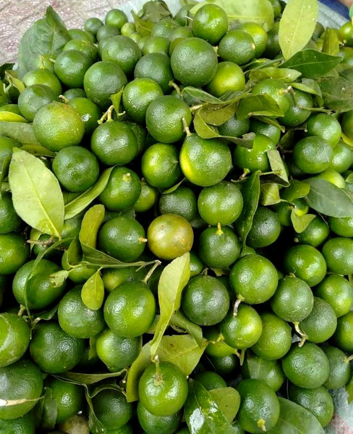 2019/11/14 Vietnam Fresh Seedless Lime / Green Lemon HIGH QUALITY, CHEAP PRICE