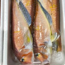 Red Tilefish (Amadai)