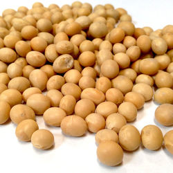 High Quality Premium Natural and Non- GMO Yellow Soybean See