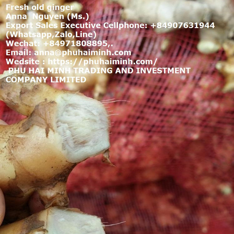 GINGER, Best Quality Ginger price of fresh ginger. from PHU HAI MINH TRADING AND INVESTMENT COMPANY LIMITED