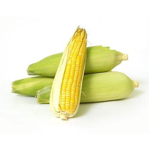 Chinese Bulk Frozen Sweet Corn On The Cob