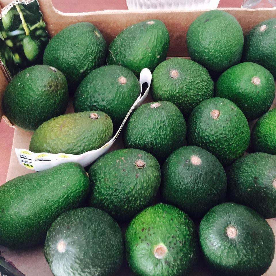 Best Price Quality Fresh/Frozen Fuerte/Hass Avocados for sale