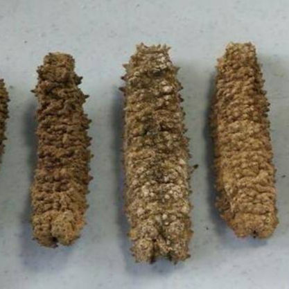 High Quality Dried and Frozen Sea Cucumber, Natural Wholesaler Sea Cucumber