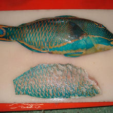 frozen parrot fish high quality from Thailand