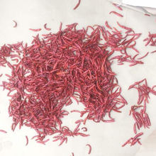 Export Quality Dried Red Chilli S17 Teja From Guntur India
