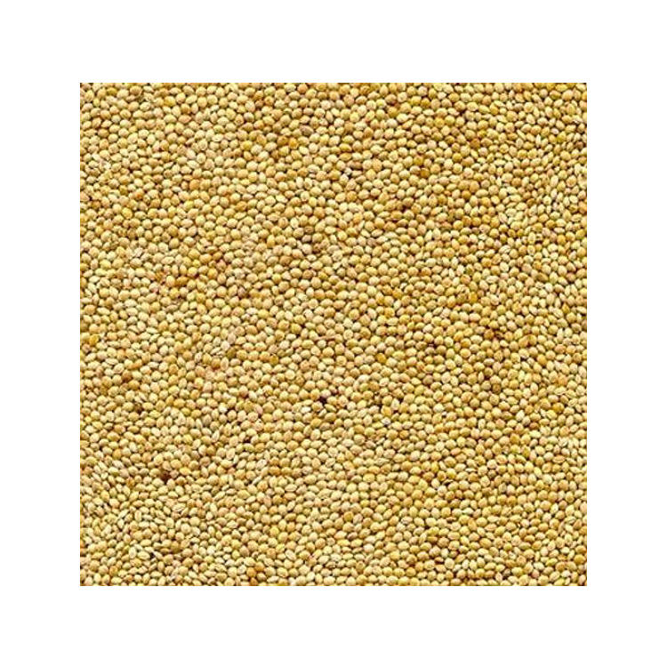2020 Best Quality Organic Millet at Best Price for Wholesale Buyers
