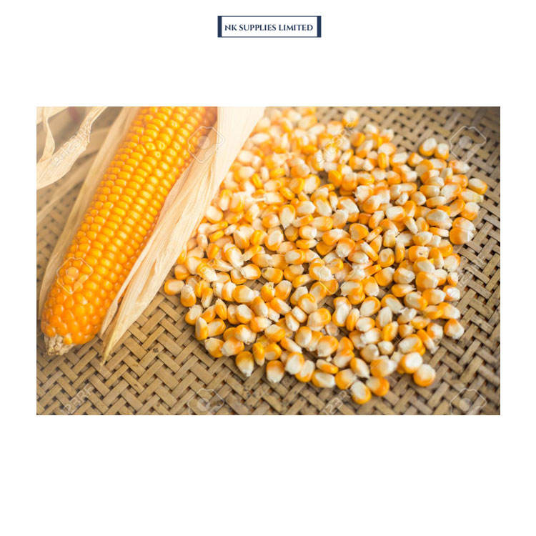 Genuine Dealer of Top Quality Yellow Maize Corn for Animal Feeding