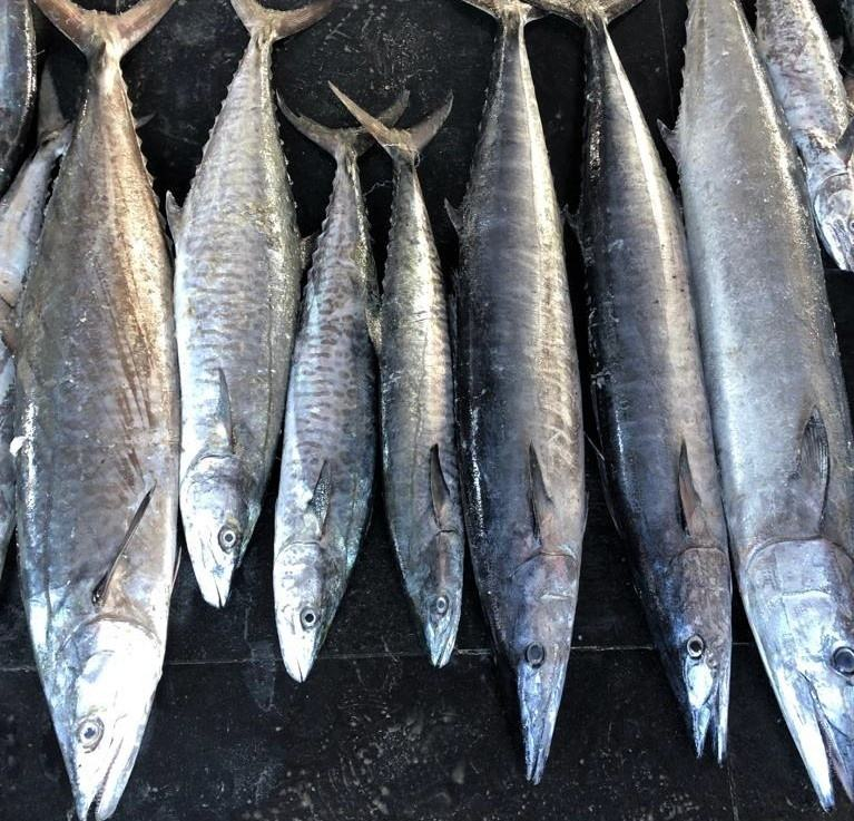 Fresh Seer Fish/Seafood/Chilled King Fish!