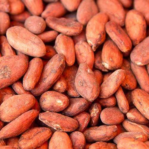Dried Cocoa Beans/ Organic Cocoa Beans