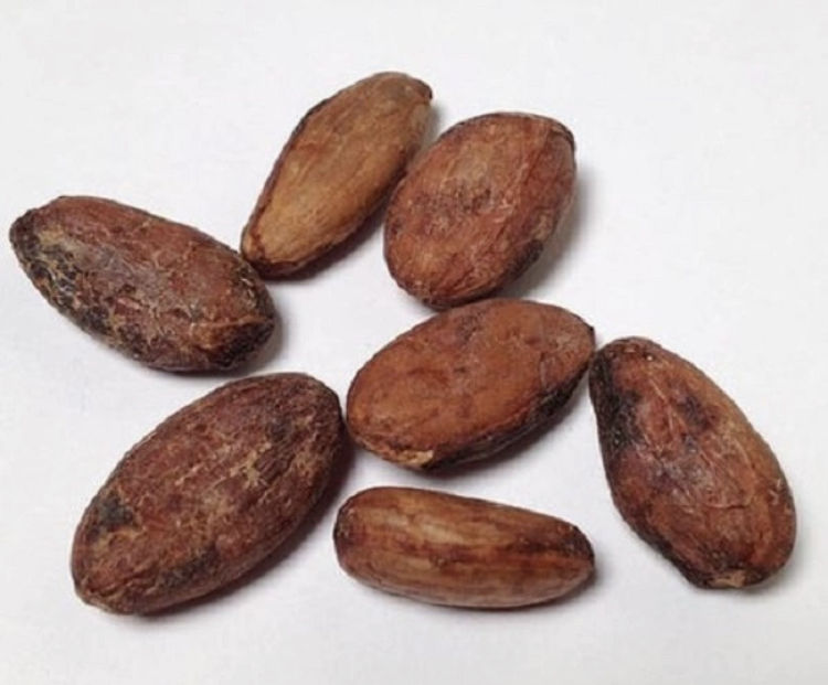 Cacao bean / cocoa (Organic certified) From South Africa