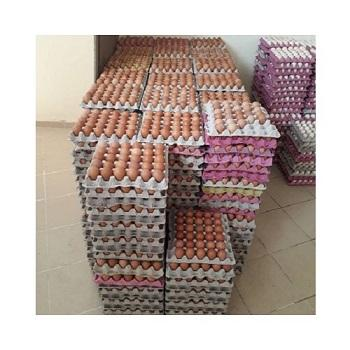 Organic Fresh Chicken Table Eggs