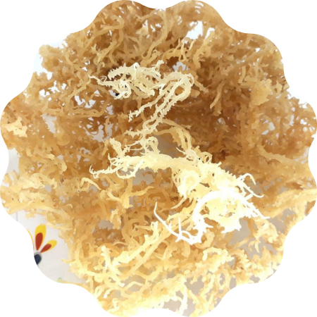 100% NATURAL AND PURE DRIED EUCHEUMA COTTONII SEAWEED/IRISH SEA MOSS COTTONII FOR HEALTH FROM VIETNAM/ Ms. Suny (+84) 0825820245