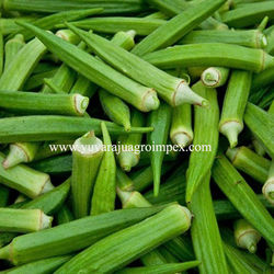 Fresh Green Okra Manufacturer/ Supplier/ Exporter in India