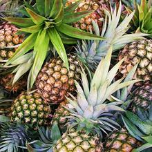 Natural Fresh Juicy Pineapple / High Quality Low Price from VIETNAM