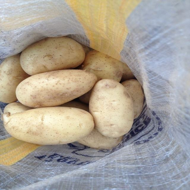Potato fresh sweet potatoes high quality cheap price professional export wholesalers fresh potato