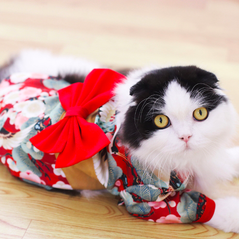 Valentine Day New noble design high end classic cat puppy Apparel Accessories Japanese dog clothes pet kimono