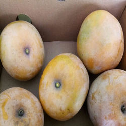 Fresh Mango Export In India To Japan/ France/Qatar/ Germany / Europe Countries