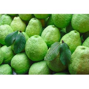 Guava Fresh Global Gap Circle Shape Taipei Brand Name Cultivation Type Organic Suitable For Customer Choice