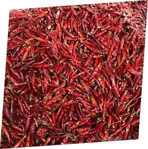 Grosir Dry Pepper Red Hot Chilli